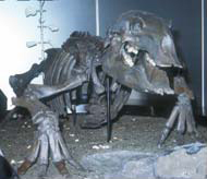 デスモスチルスの復元骨格(写真提供:犬塚則久氏)