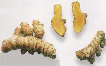 ショウガは、健胃、消化促進、発汗、血圧降下などの作用がある。マレーシアにはたくさんのショウガ科植物があり、現在約100種類のショウガ科植物の栽培を行なっている<写真提供:中谷延二氏>