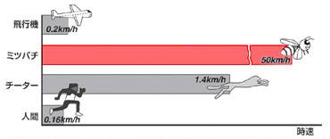 飛行機、ミツバチ、チーター、人間が競争(ミツバチの体長に縮小してスピードを換算)すると、圧倒的にミツバチが速い(資料提供:劉浩氏)