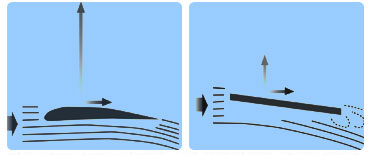 (左)流線型をした飛行機の翼の断面。(右)昆虫の翅の断面。上向きの力が揚力、前進する力が推進力。空を飛ぶには、この2つの原理が働いている(資料提供:劉浩氏)