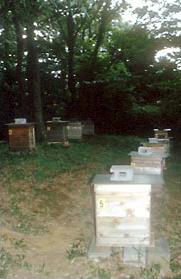 玉川大学構内には、ミツバチの巣箱が設置してあり、多くのミツバチを飼っている