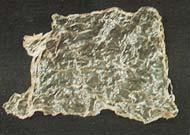 フィルム状になったシルク。シルクはさまざまな形状に変化する性質を持っている