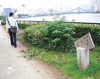 芭蕉ゆかりの墨田川沿いには句碑が点在、散策者を楽しませている