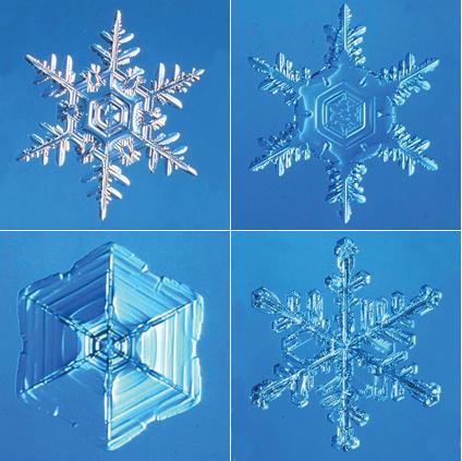 一つとして同じ形はない雪の結晶。結晶が成長する場所の温度と湿度により形が決まる。人間の息がかかっただけでも融けてしまうため、撮影には細心の注意が求められる。