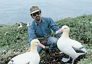 鳥島にデコイを設置(1992年4月撮影)
