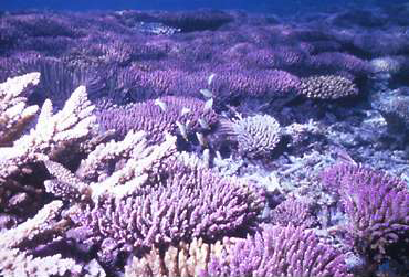 美しいサンゴ礁が果てしなく広がる阿嘉島周辺