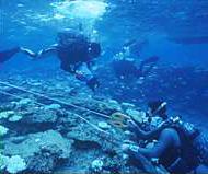 阿嘉島臨海研究所では、年に200回以上潜ってサンゴの観察や調査を行なう