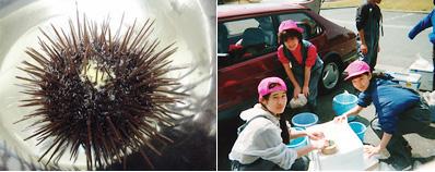 ウニの精子を使い、べん毛運動の解明を行なう。毎年春には、実験材料のウニの採集のため、福島県まで愛用のサーブでドライブをする<写真提供:真行寺千佳子氏>