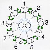 べん毛の横断面図。小さなタンパク質からなる管「微小管」が束ねられてできている。9本の複合微小管が、中心の2本の微小管を囲む構造となっている。「ダイニン」は、9本の微小管から腕のように突き出している。これを「9+2構造」と呼ぶ。