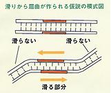 べん毛の内部には、力を発生させるタンパク質「ダイニン」がある。ダイニンが生命のエネルギー源である「ATP」を分解すると、微小管同士が互いに縦方向にずれて、「滑り」を起こす。この滑りによって、S字状の波を作る「屈曲形成」や、その波を後方に伝え、同時に逆方向の波を作るという周期的な「振動運動」が起こる。真行寺氏は、べん毛の一部だけにATPを与え、その部分だけで滑りが起こる結果、その両側の滑らない部分との間に屈曲が作られることを検証する実験を行なった(1977年、ネイチャー誌に発表)