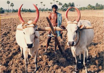 IT先進国として、世界からその成長が注目される一方、国民の7割は農民〈写真提供:重松伸司氏〉