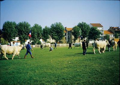 フランスの肉牛・シャロレーの品評会の様子。フランスにおいても立派な肉牛は農家の自慢である。宮崎県で発生した口蹄疫により、これら自慢の牛達を数多く殺処分されてしまった農家の悲痛を強く思い起こさせる〈写真提供:白井淳資氏〉
