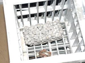 多孔質素材が水流で流されないように、金属製のカゴに入れて実験を行なっている<写真提供:臼井惠次氏>