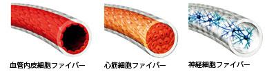 血管内皮細胞ファイバー、心筋細胞ファイバー、神経細胞ファイバー