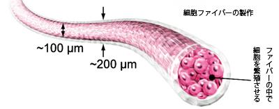 細胞ファイバーの製作