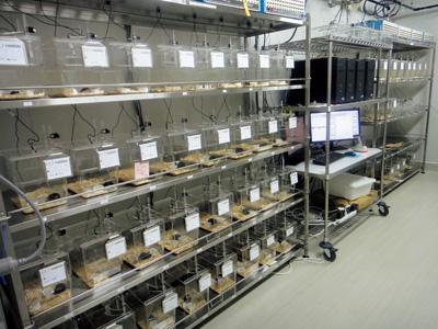IIISでは、数千匹のマウスを対象に、睡眠に関わる遺伝子の調査を行っている<写真提供:柳沢正史氏>
